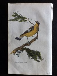 Brightly 1815 Antique Hand Col Bird Print. Flycatcher